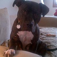 Adopt A Pet :: ELIA - Kimberton, PA