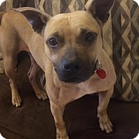 Adopt A Pet :: JoJo in CT - Manchester, CT