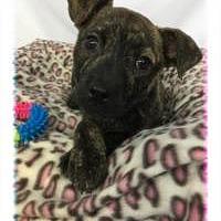Adopt A Pet :: Elantra - Greensboro, GA