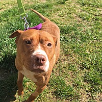 Adopt A Pet :: Gloria-prison trained - Hazard, KY