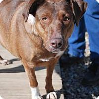 Adopt A Pet :: Patty - Berea, OH