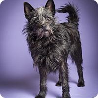 Adopt A Pet :: Kiki - MEET ME - easy peasy - Norwalk, CT