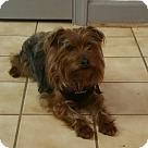 Adopt A Pet :: Mr. Scruffy Face