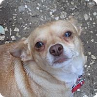 Adopt A Pet :: A - GLORY - Burlington, VT