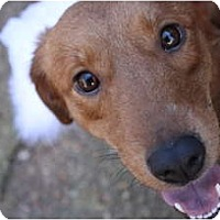 Adopt A Pet :: Hayley - Hagerstown, MD