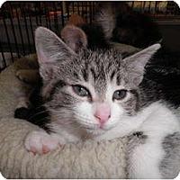 Adopt A Pet :: Mimi - Warren, MI