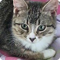 Adopt A Pet :: Kiki - Raritan, NJ
