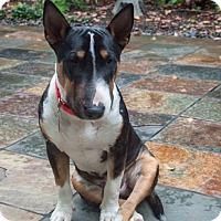 Adopt A Pet :: Romeo - Houston, TX