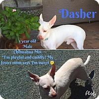 Adopt A Pet :: Dasher - Phoenix, AZ
