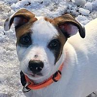 Adopt A Pet :: Tate - Jasper, GA
