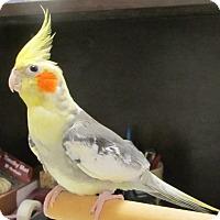 Adopt A Pet :: Bell - Edgerton, WI