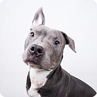 Adopt A Pet :: Romeo - Decatur, GA