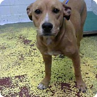 Adopt A Pet :: STARLA - Atlanta, GA