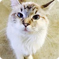 Adopt A Pet :: Brianna - Oakdale, CA