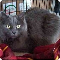 Adopt A Pet :: Samantha - Odenton, MD
