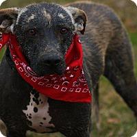 Adopt A Pet :: Charlotte - Brattleboro, VT