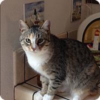 Adopt A Pet :: Carly - San Ramon, CA