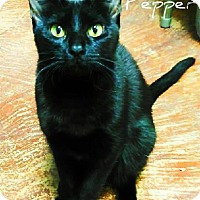 Adopt A Pet :: Pepper - Laplace, LA