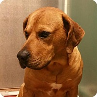 Adopt A Pet :: Deko - Cumming, GA
