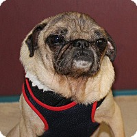 Adopt A Pet :: Bones - Gardena, CA