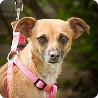 Adopt A Pet :: Cupid - Ashville, OH