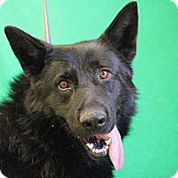 Adopt A Pet :: Brynjolf - Roosevelt, UT