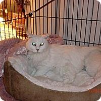 Adopt A Pet :: Destiny - San Luis Obispo, CA