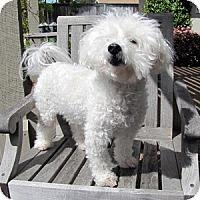 Adopt A Pet :: Banjo - La Costa, CA