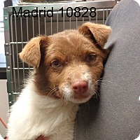 Adopt A Pet :: Madrid - Greencastle, NC