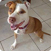 Adopt A Pet :: Champion - San Diego, CA