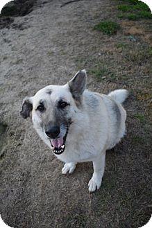 German Shepherd Dog Mix Dog for adoption in Pembroke, Georgia - Cupcake