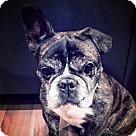 Adopt A Pet :: Pucker