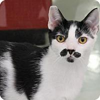 Adopt A Pet :: Groucho - Encinitas, CA