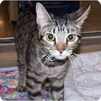 Adopt A Pet :: SCOUT - Diamond Bar, CA