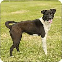 Adopt A Pet :: Stephie in Louisiana - Houston, TX