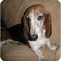 Adopt A Pet :: Angelica - Phoenix, AZ
