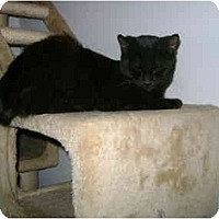 Adopt A Pet :: Addie - Etobicoke, ON