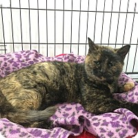 Adopt A Pet :: Rita - Speonk, NY