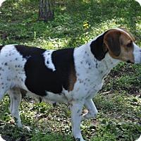 Adopt A Pet :: PATTY - Odessa, FL