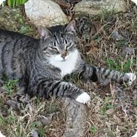 Adopt A Pet :: Jazz - Simpsonville, SC