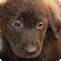 Adopt A Pet :: Moana - Ogden, UT