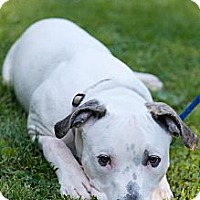 Adopt A Pet :: Jake - Reisterstown, MD
