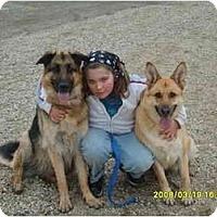 Adopt A Pet :: Shelby - Hamilton, MT