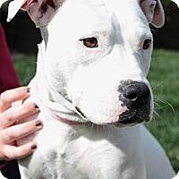 Adopt A Pet :: Mary Jane - Sacramento, CA