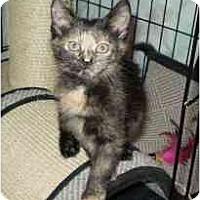 Adopt A Pet :: Honey - Boston, MA