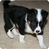 Adopt A Pet :: Panda - Westfield, IN