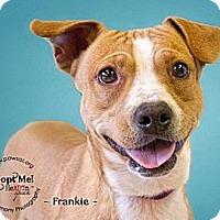 Adopt A Pet :: FRANKIE - Higley, AZ
