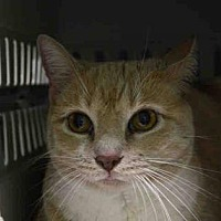 Adopt A Pet :: Trudy - New York, NY