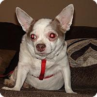 Adopt A Pet :: Nana - Grass Valley, CA