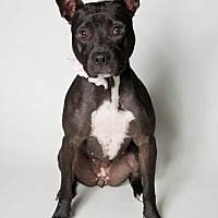 Adopt A Pet :: Roxie - Kenner, LA